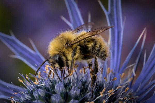 گل های مورد علاقه زنبور عسل