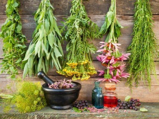 گیاهان دارویی - زنبور عسل