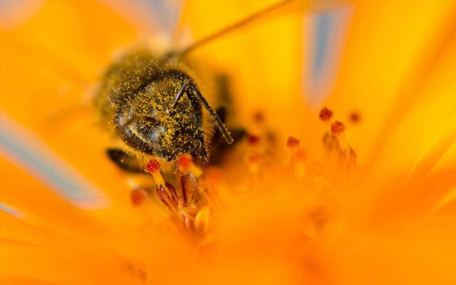 ژل رویال، توسط زنبور عسل، به منظور تغذیه زنبور ملکه تولید میشود.