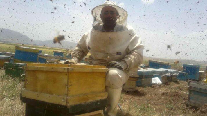 زنبورداری - جواد مجد