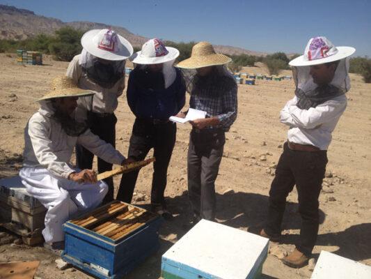 زنبورداری عسل طبیعی