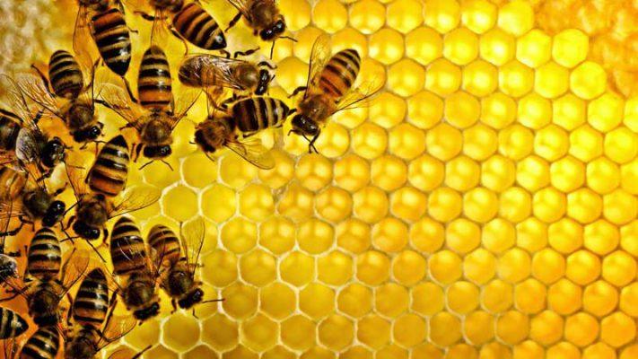 زنبورعسل و موم