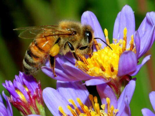 زندگی زنبورها 3