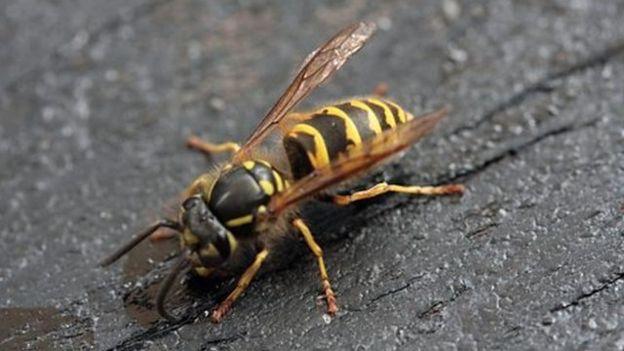 زندگی زنبورها1