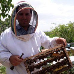 زنبوردار ایران تولید کننده عسل