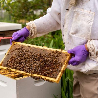 زنبورداران معروف