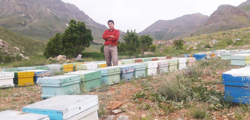 زنبوردار نجف آباد عسل طبیعی