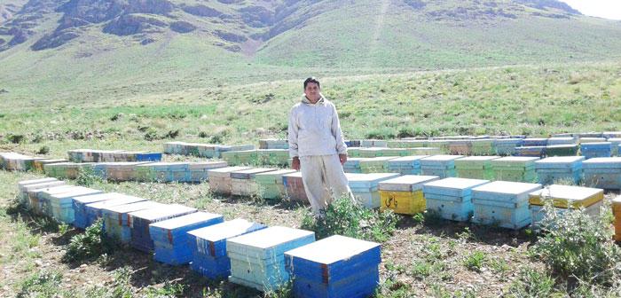 زنبوردار نجف آباد