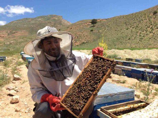 زنبوردار اسفراین
