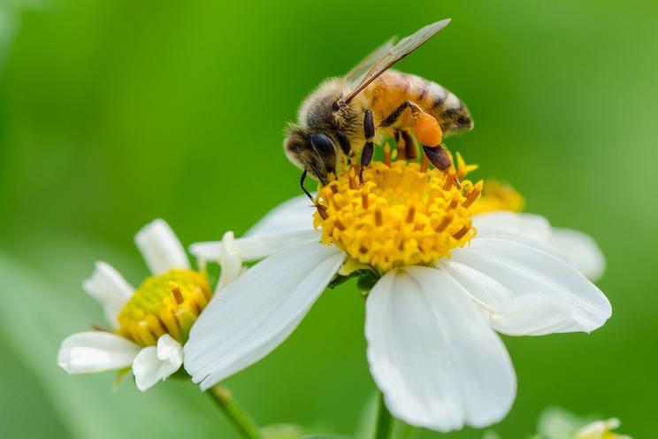 زنبور عسل 2