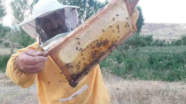 عسل طبیعی خلخال خالص