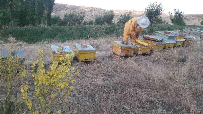 عسل اصل طبیعی خلخال