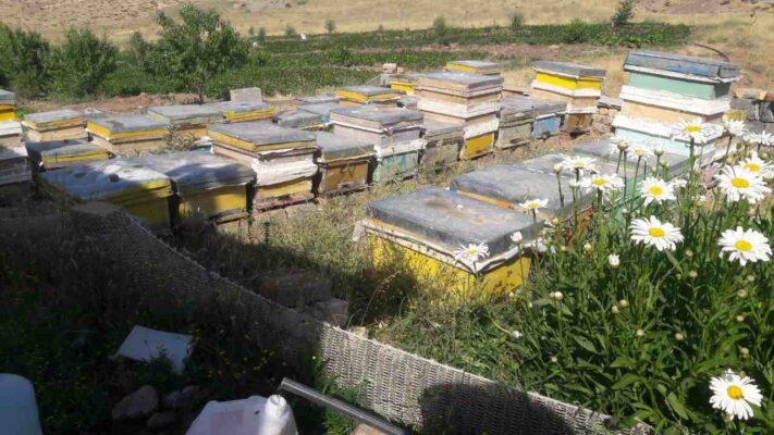 کندوی عسل طبیعی خلخال