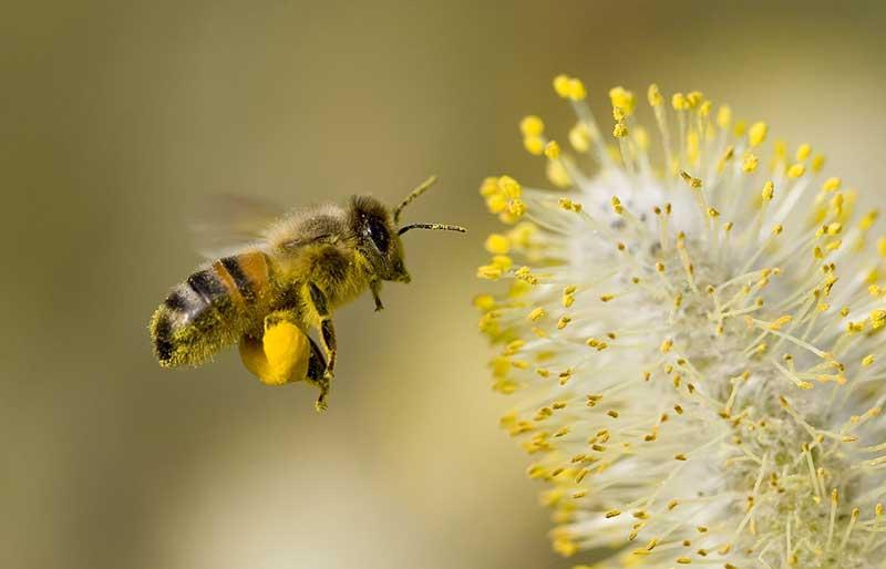 انواع عسل 7
