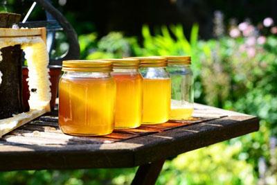 شیشه عسل هانیلی