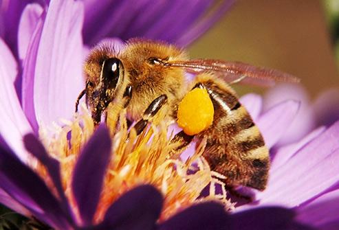 درمان خانگی نیش زنبور