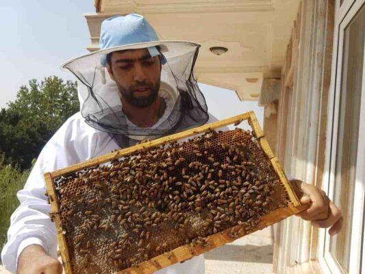 زنبوردار هانیلی مجتبی جوشقانی