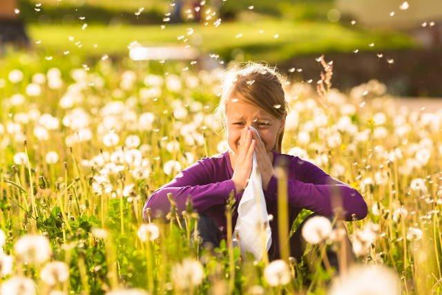 درمان آلرژی با گرده گل زنبور 2