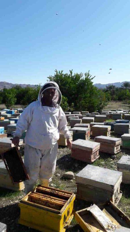 زنبوردارهانیلی