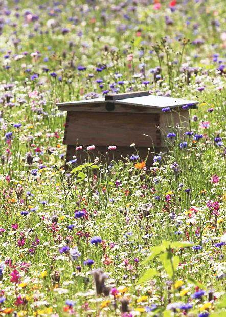 انتقال زنبور عسل به کندو 3