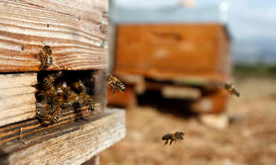 انتقال زنبور عسل به کندو